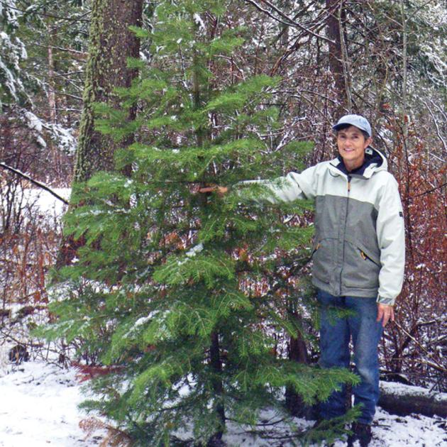 Local Christmas Trees: Christmas Tree Permits Sales For Boise And Payette