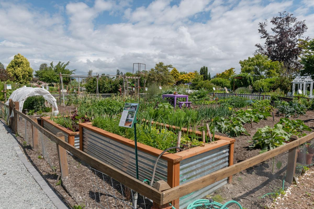 Discovery Garden vegetable patch