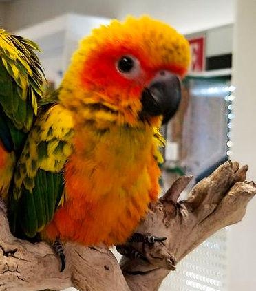 McKee's baby bird