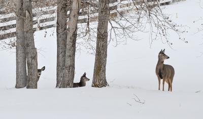 Deer weather snowstorm