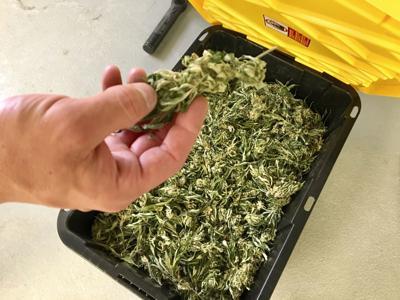 Medical Marijuana Growers-Utah