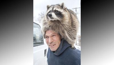 Pocatello animal rescuer has pet raccoon | Members