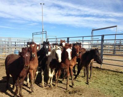 wild horses boise