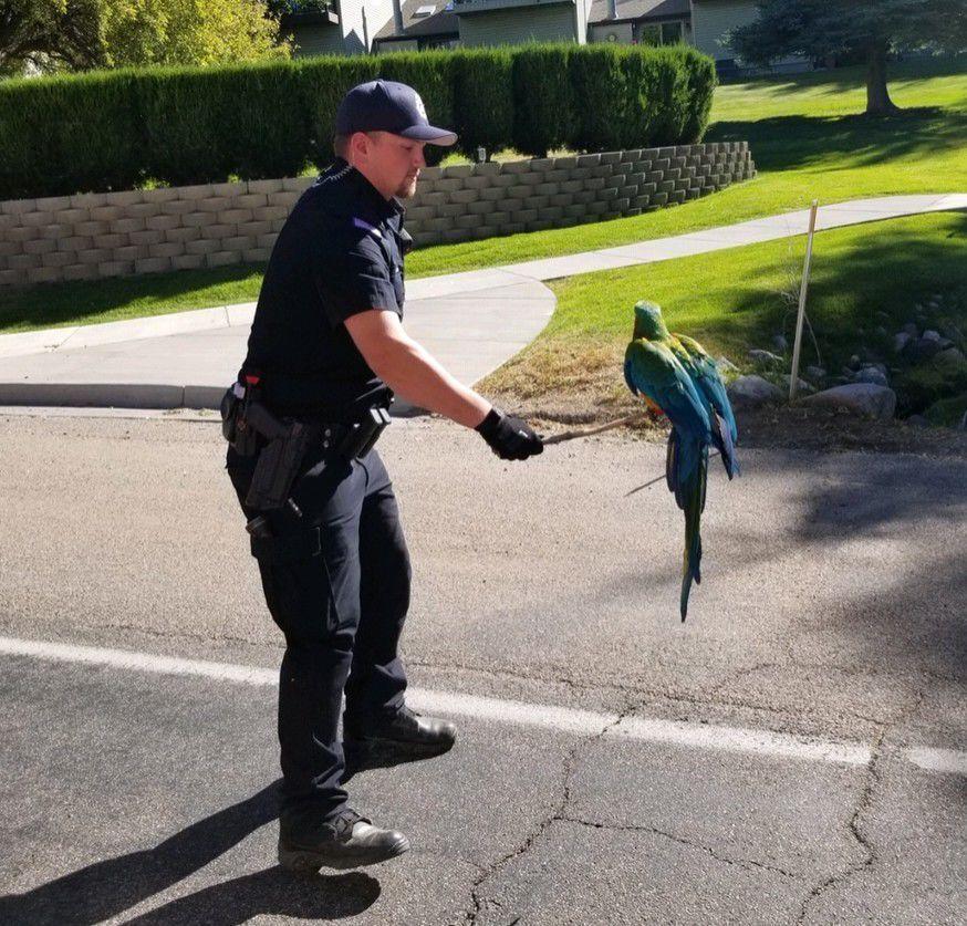 Police capture parrot