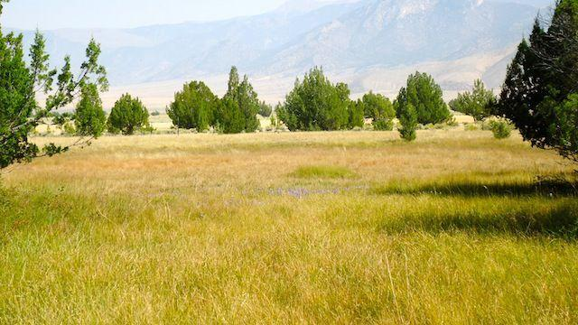 Pocatello attorney prevails in largest water rights case in Nevada history - Idaho State Journal