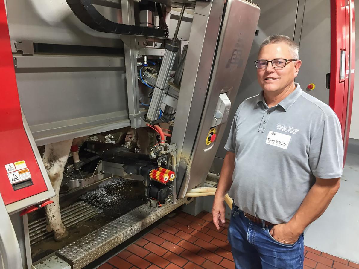robo milking1