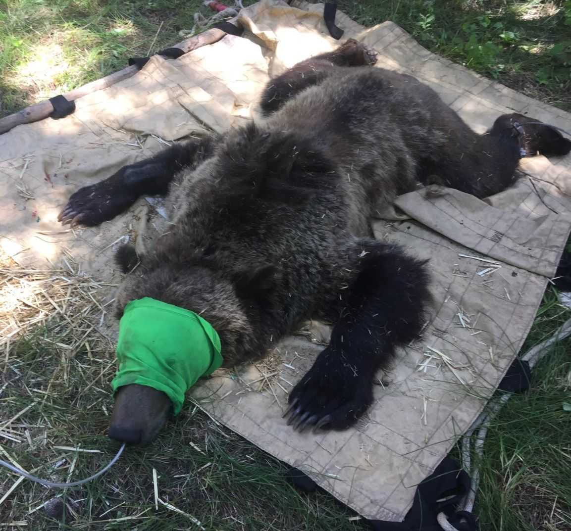 Mill Creek Bear