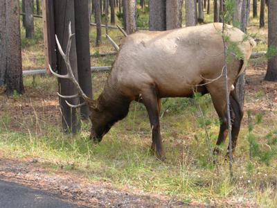 Guide to the Upper Loop of Yellowstone