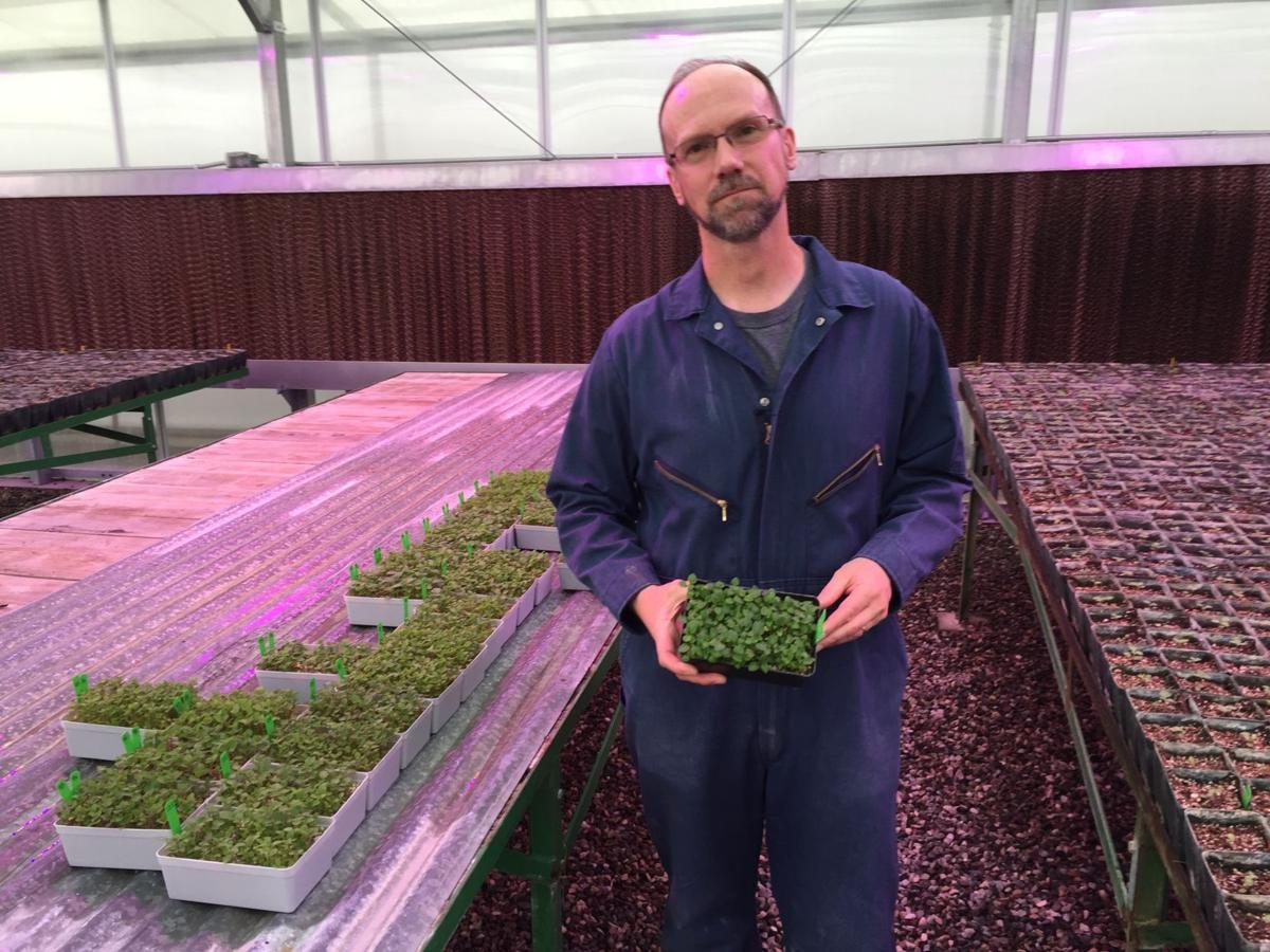 Novy seedlings