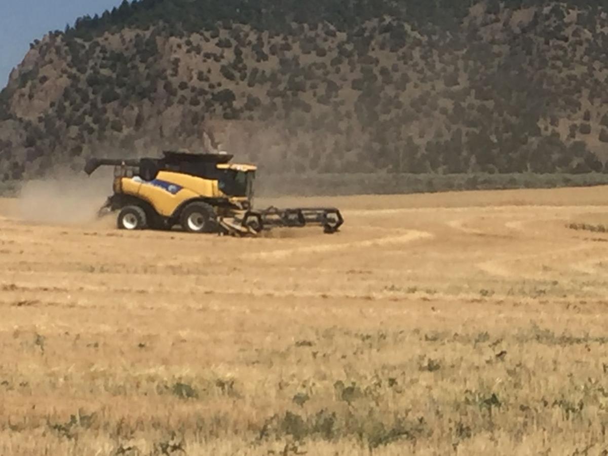 Dryland wheat main