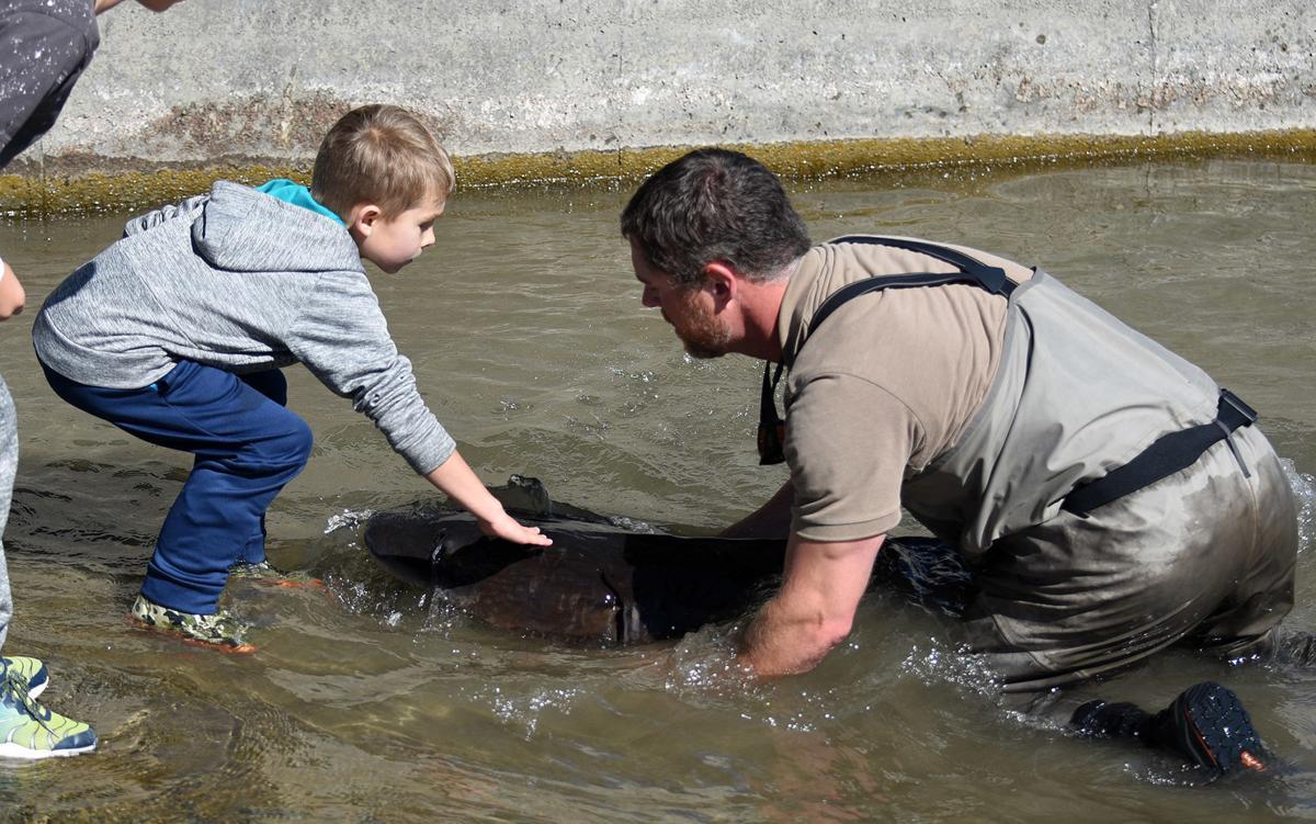 petting sturgeon