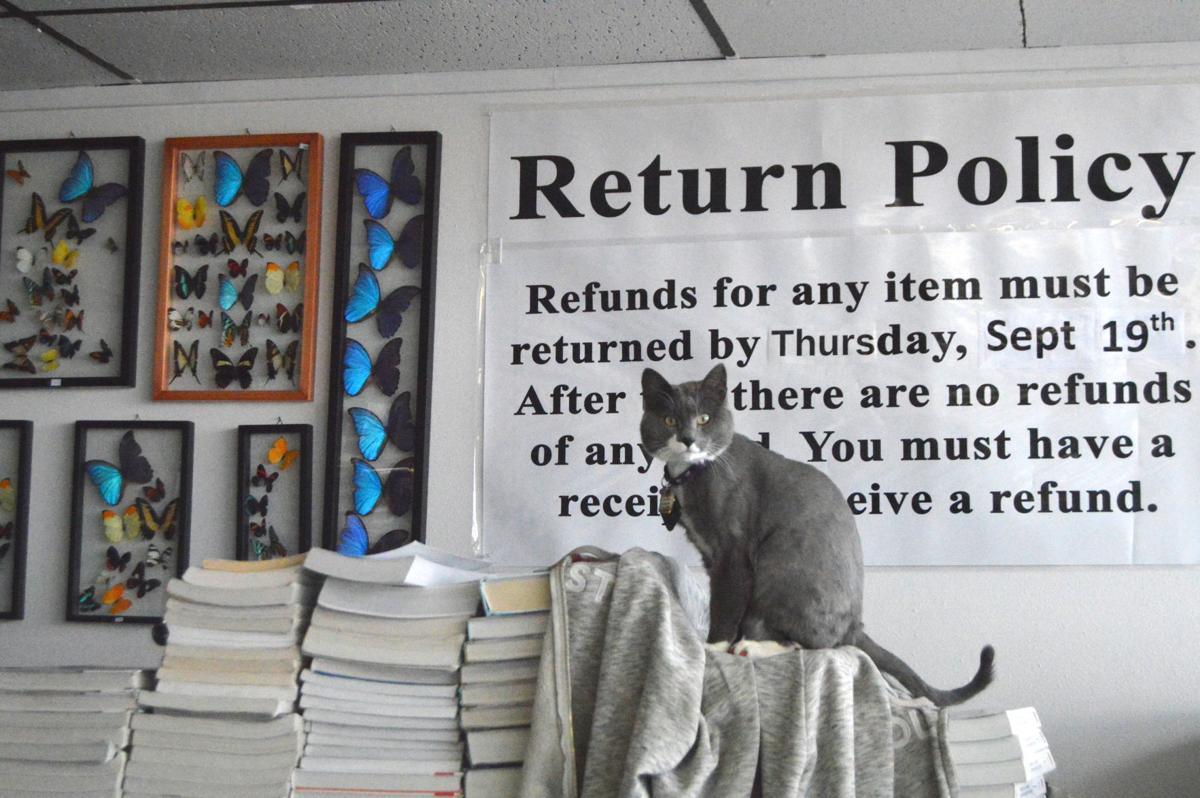 Bookstore cat Thor