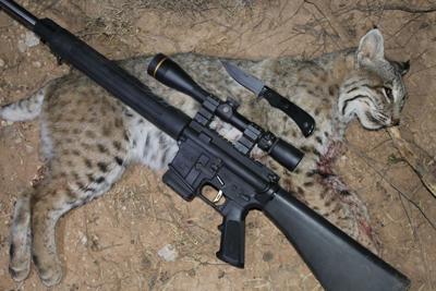 Bobcat Hunting In Texas Xtreme Idaho Idahostatejournalcom
