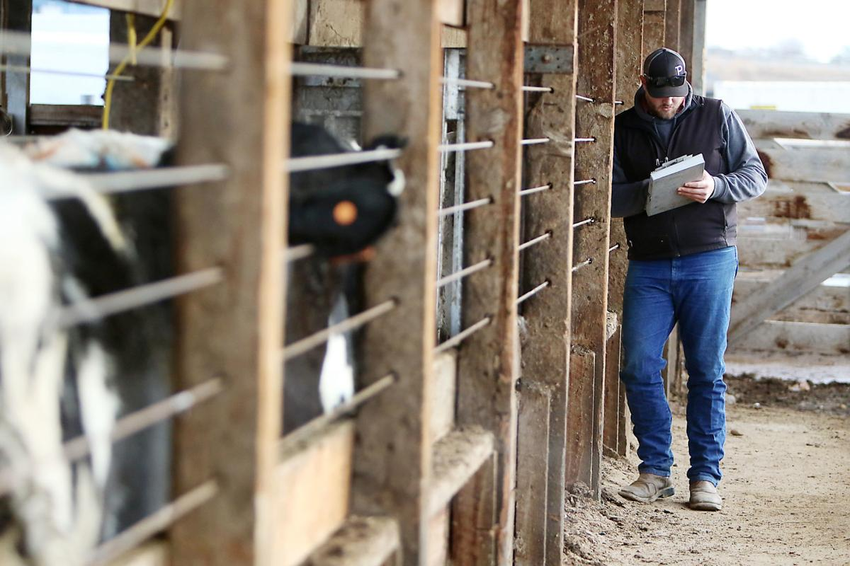 ISP's livestock brand inspectors track millions of cattle yearly