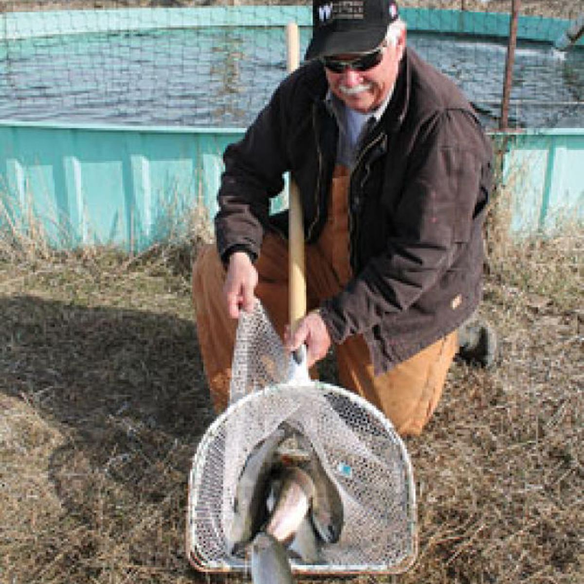 Raising, selling trout: Area man provides fish to