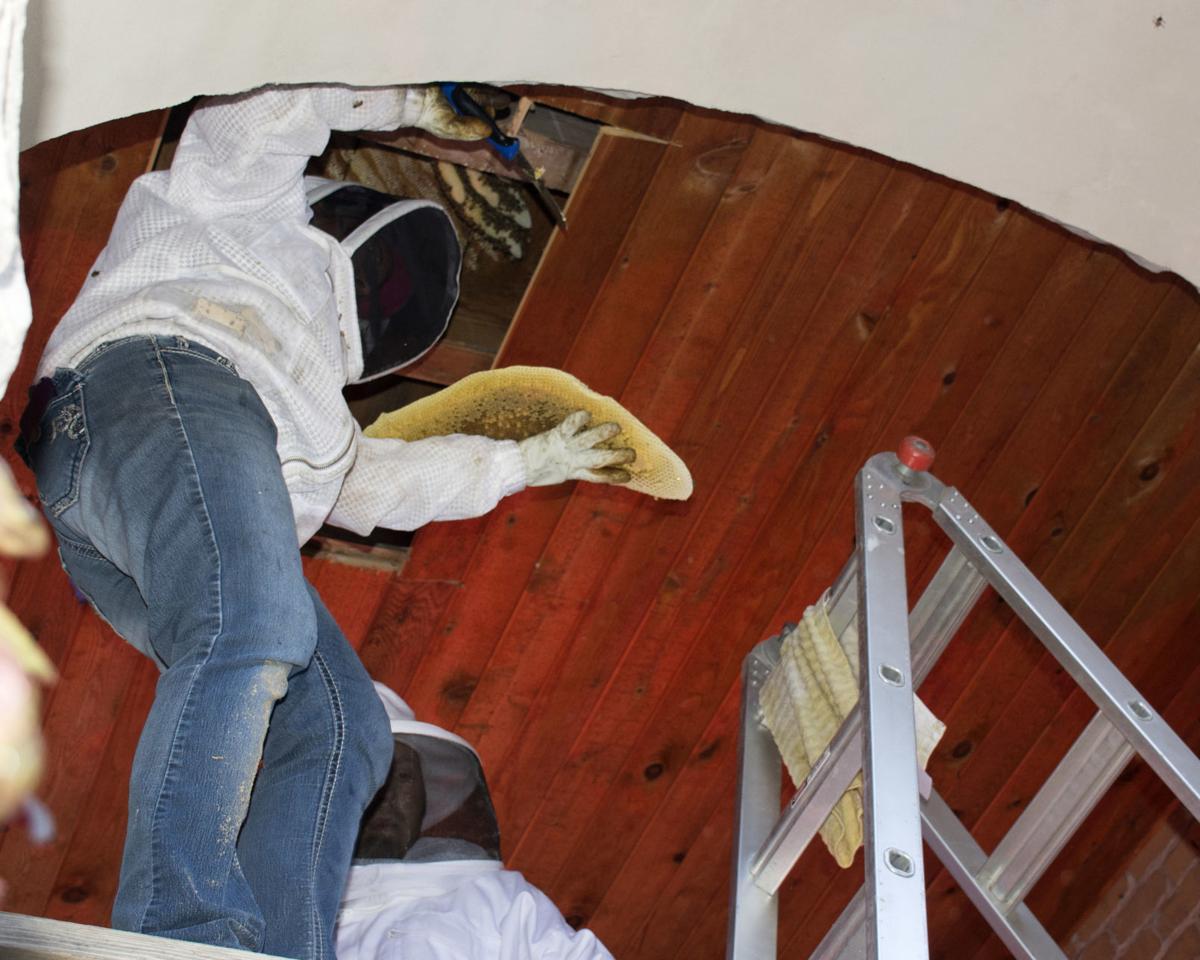 Sarah Hofeldt removing honeycomb