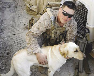 Marine Dog