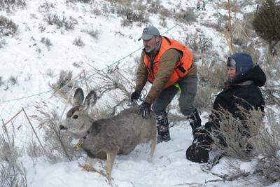 Deer mugging