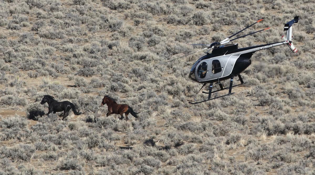 Wild horse one