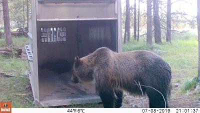 bear trap (copy)