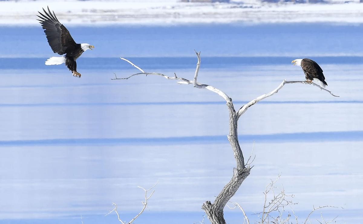 eagles SECONDARY