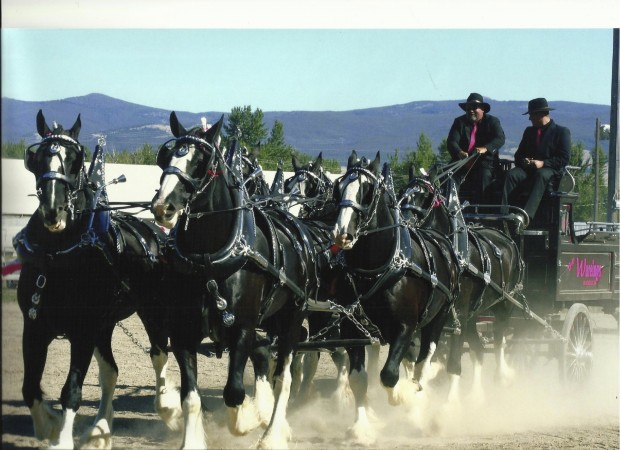 Blackfoot Man Played Role In Shire Horse Resurgence Members Idahostatejournal Com