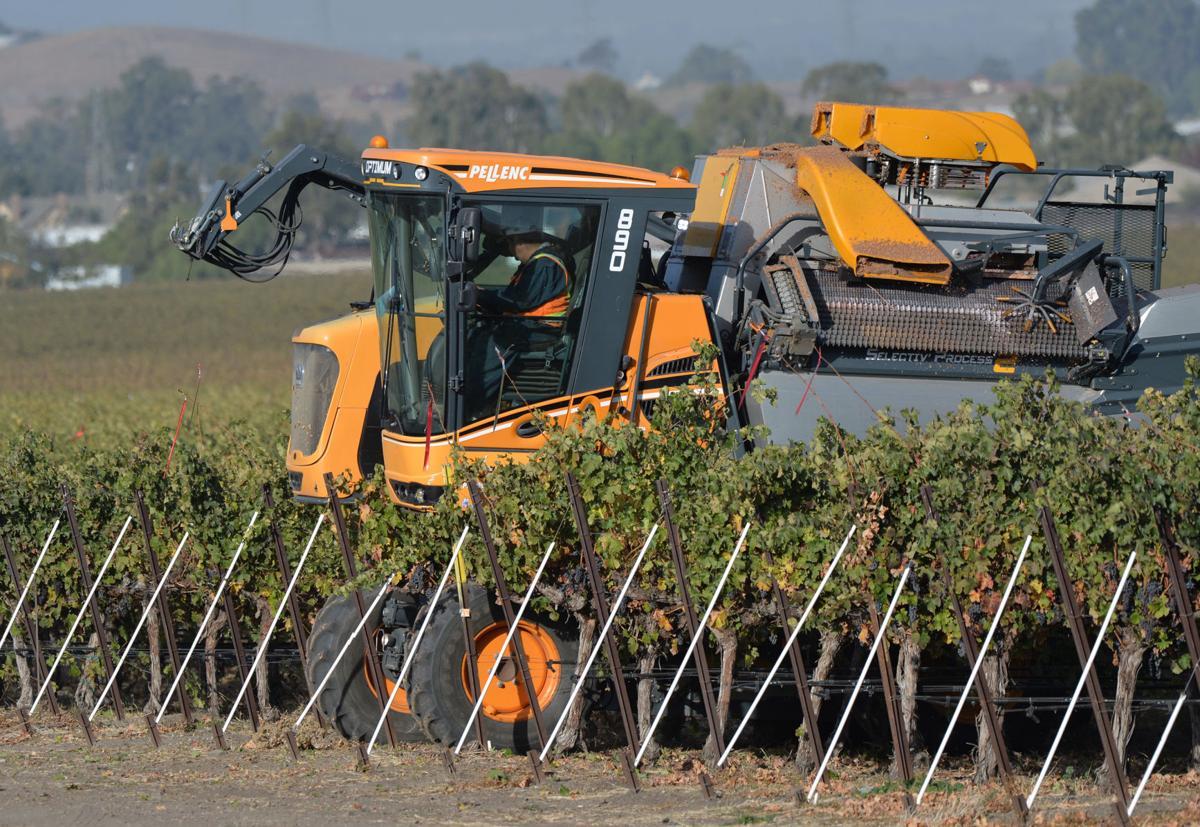 Harvest 10-31-19 170