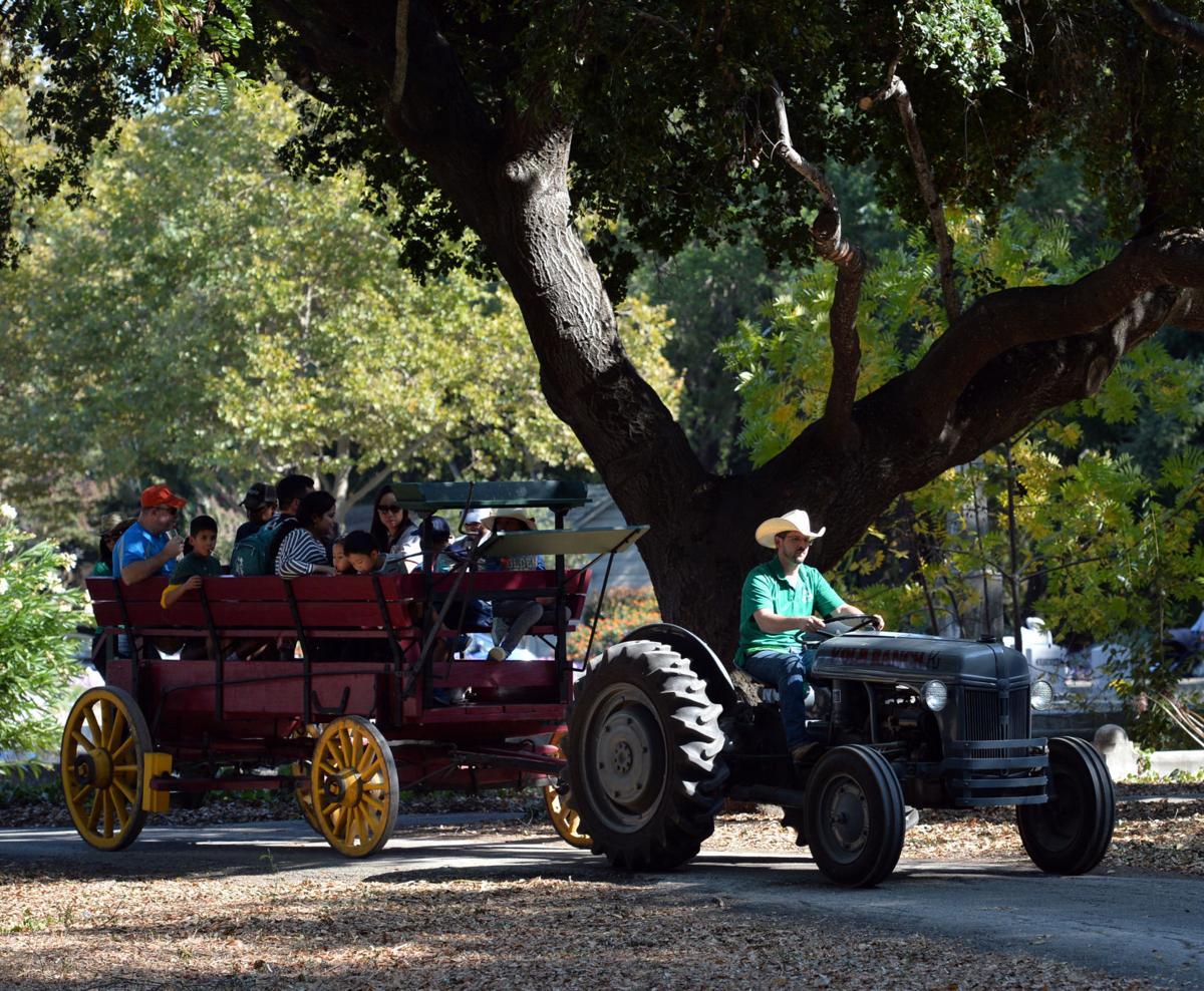 Harvest Fair 10-12-19 057
