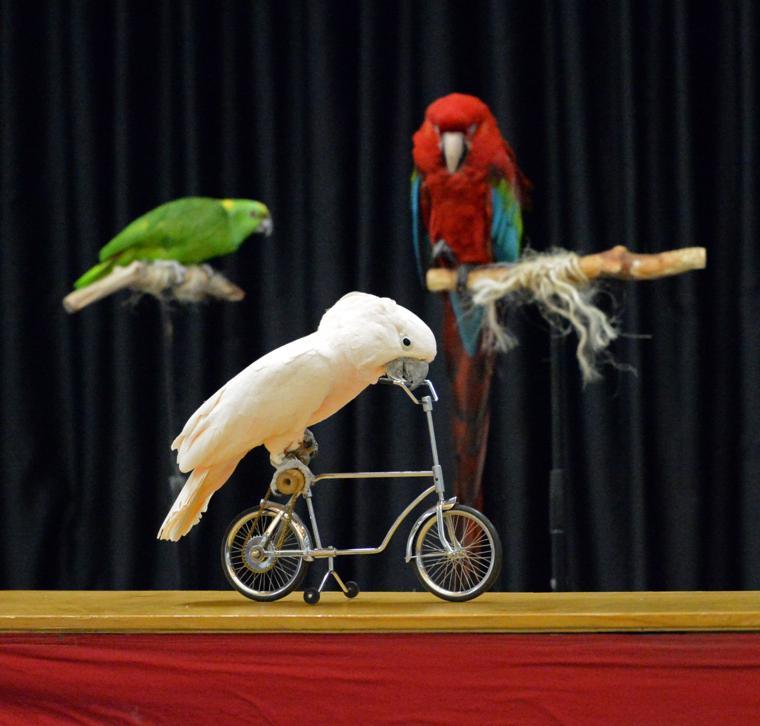Happy Birds 03-30-19 090
