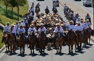 """The """"Last Ride"""" cattle drive opened the Alameda County Fair on Friday, June 14th. During the drive, 150 large steers were led from the County Fairgrounds to Main Street in downtown Pleasanton. This was the final opportunity for onlookers to see a cattle drive through the Pleasanton downtown. (Photos – Doug Jorgensen)"""