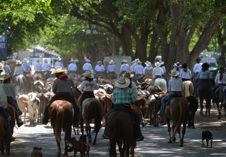 Last CattleDrive 06-14-19 804