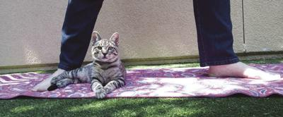 Lace Kitten Yoga