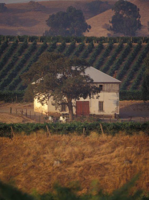 Scenic Vineyards