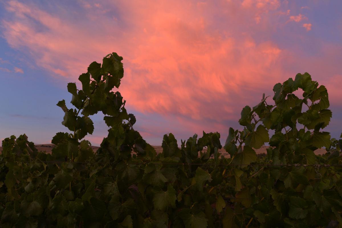 Vineyard 7-21-19 _0018
