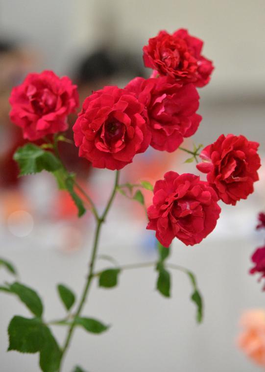 Pleas Rose Show 05-11-19 162
