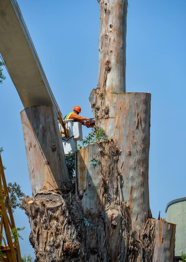 Pleas Tree  09-03-20 014.JPG