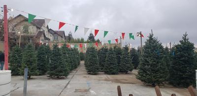 LIV - Scout Trees