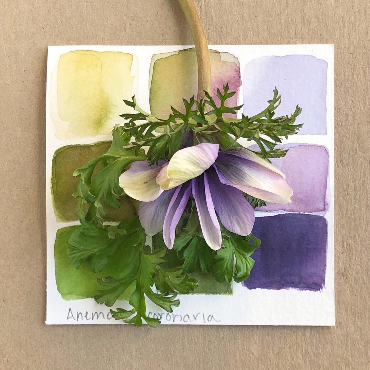 LIV - LAVGC Color in the Garden - Anemone.jpg