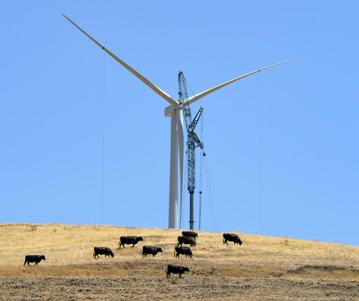 Windmill 07-25-20 226