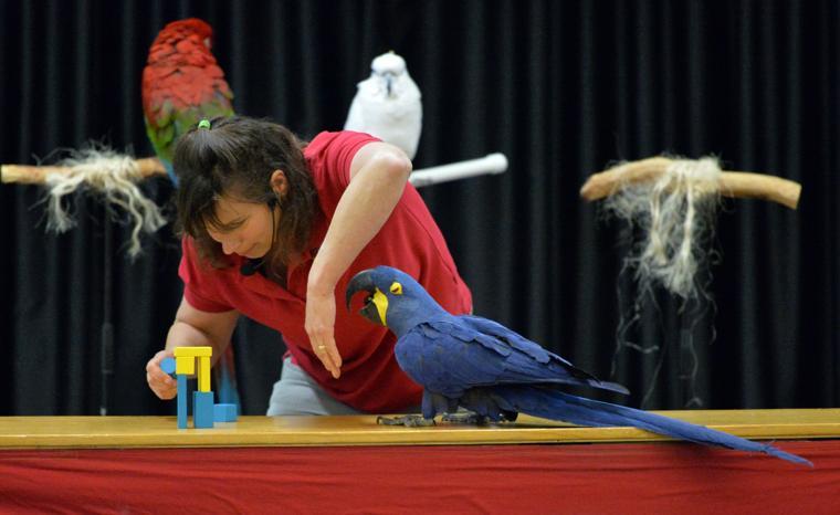 Happy Birds 03-30-19 373