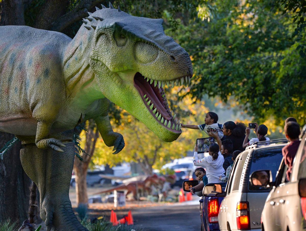 Dinosar Drive  11-14-20 1264