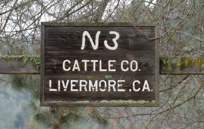 N3 Cattle Co 01-20-20 020