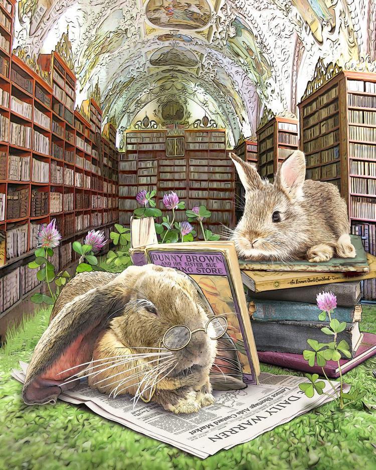 Library Rabbits