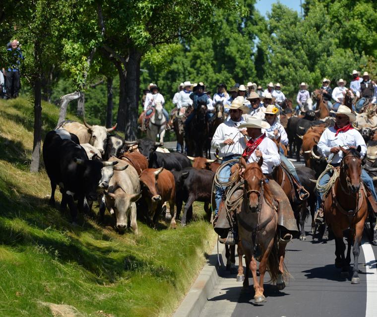 Last CattleDrive 06-14-19 445