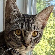 Freddie Purrcury Pet of the Week.jpg