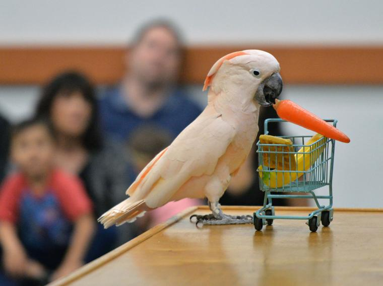 Happy Birds 03-30-19 556