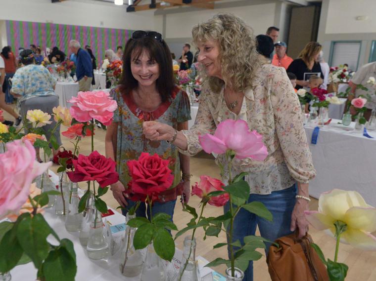 Pleas Rose Show 05-11-19 035