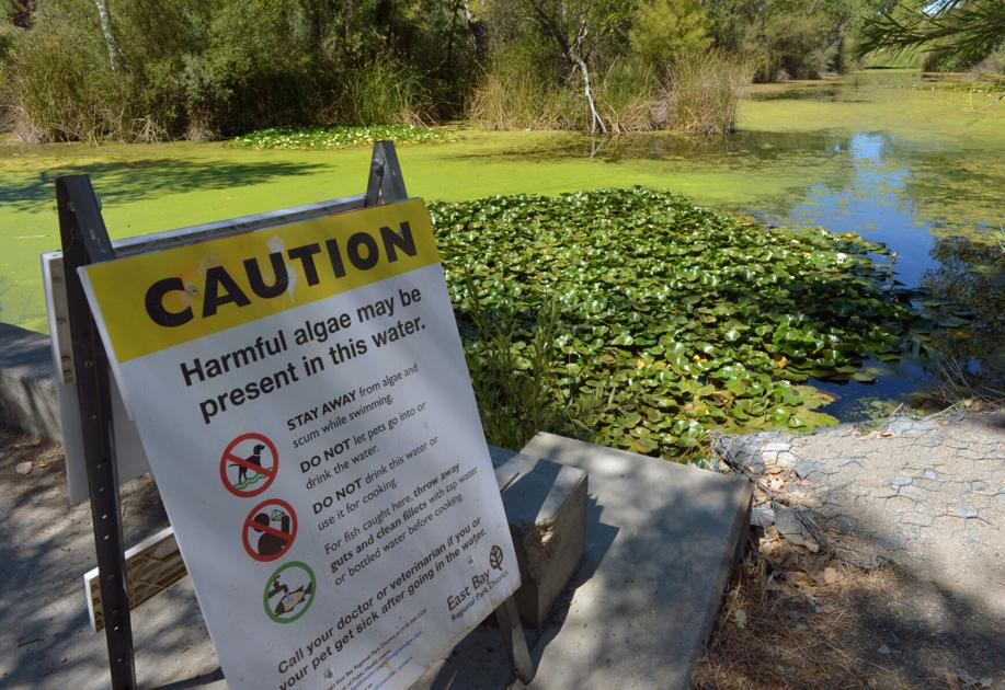 Zone 7 Starts Ozone Treatment of Musty Drinking Water at Del Valle Water Treatment Plant - Livermore Independent