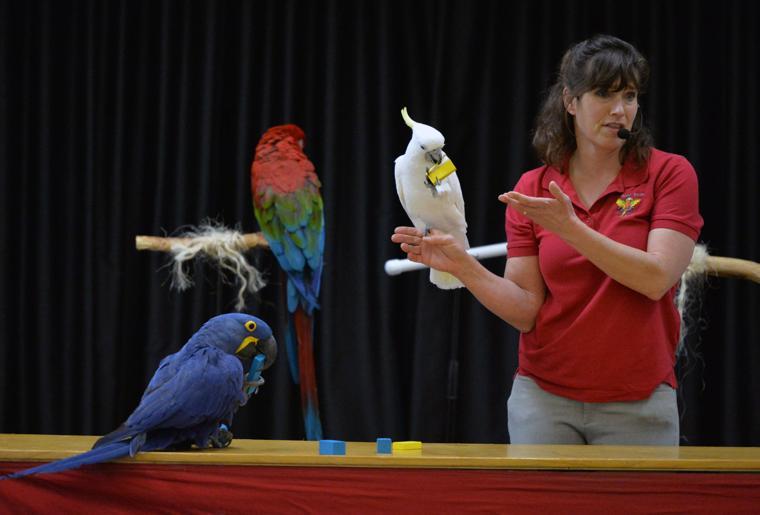 Happy Birds 03-30-19 384