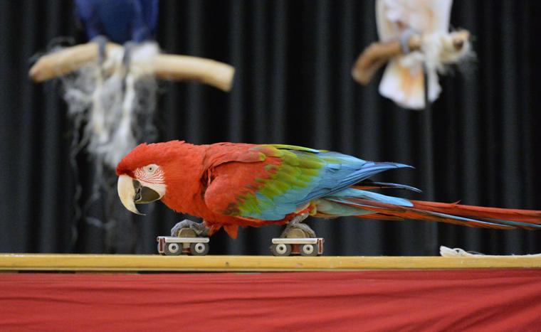 Happy Birds 03-30-19 724